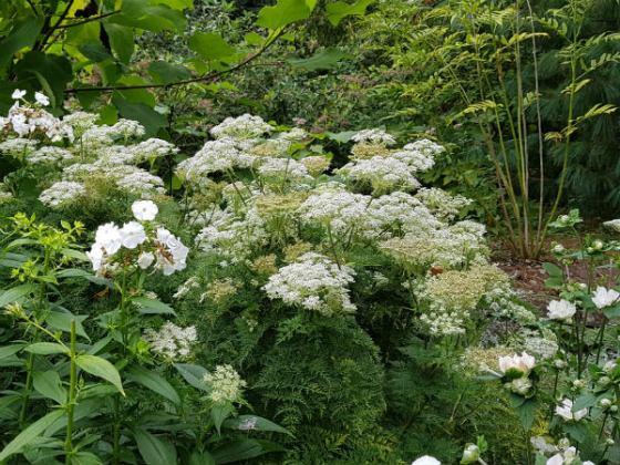The white end of the border, Birmingham Botanical Gardens