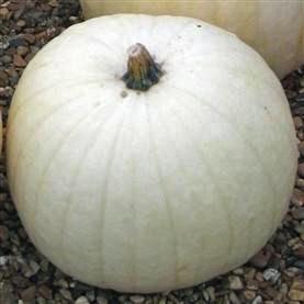 Pumpkin Snowman. Picture; Chiltern Seeds