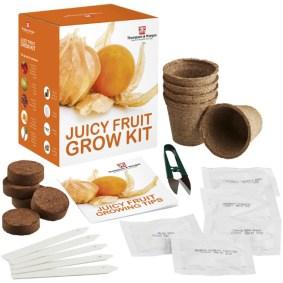 Juicy Fruit Grow Kit. Picture; Thompson & Morgan