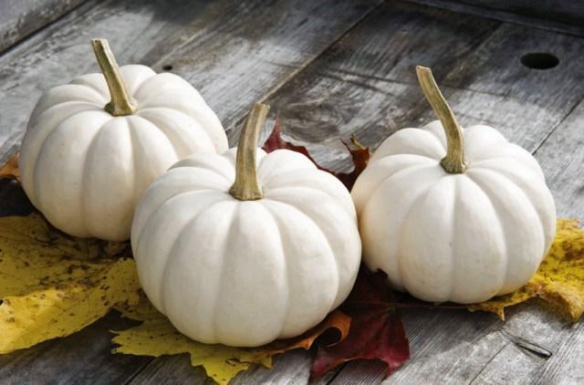 Pumpkin Casparita. Picture; DT Brown