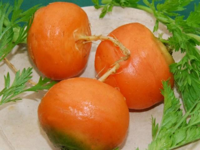 Carrot Paris Market Baron. Picture; Plant World Seeds