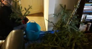 Chopping up the Christmas tree for recycling