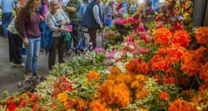 Admire the exhibitors' displays. Picture; Gardening Scotland