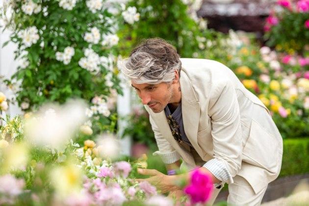 George Lamb. Picture; David Austin Roses