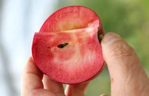 Redlove apple Jedermann's. Picture; Lubera
