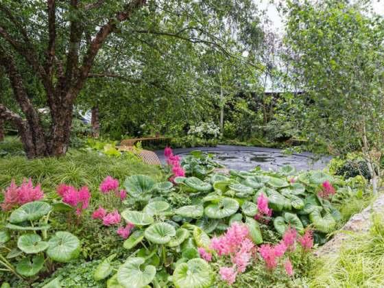 Smart Meter Garden by Matthew Childs. Picture; RHS/Neil Hepworth