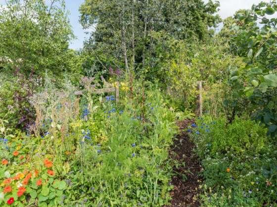 The Wild Garden by Rossana Porta. Picture; RHS/Joanna Kossak