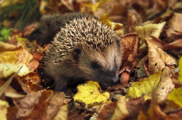 Keep your garden untidy for wildlife in autumn