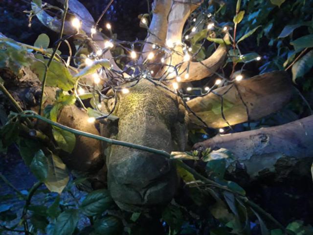 The deer head has lost an ear but gained festive lights