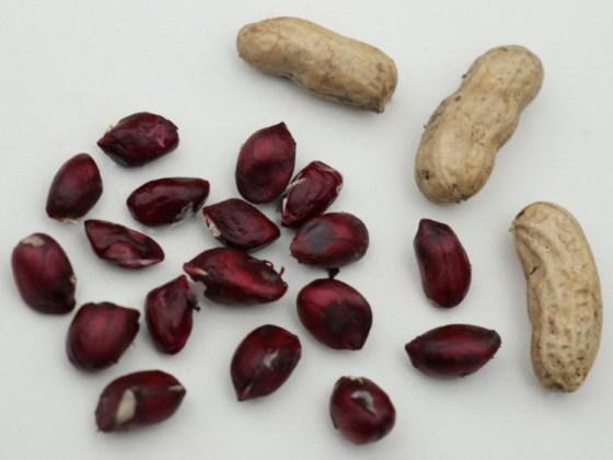 Peanut Justblack. Picture; Lubera