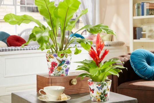 Paradise pots. Picture; Scheurich