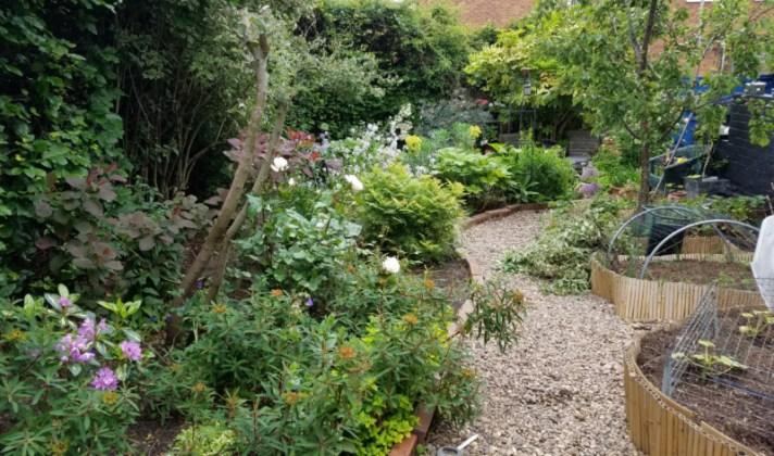 Looking down the garden path, June 9