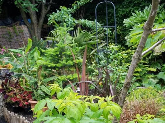 Tropical bed, June 19
