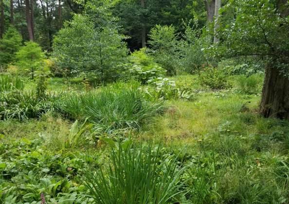Bog garden general view