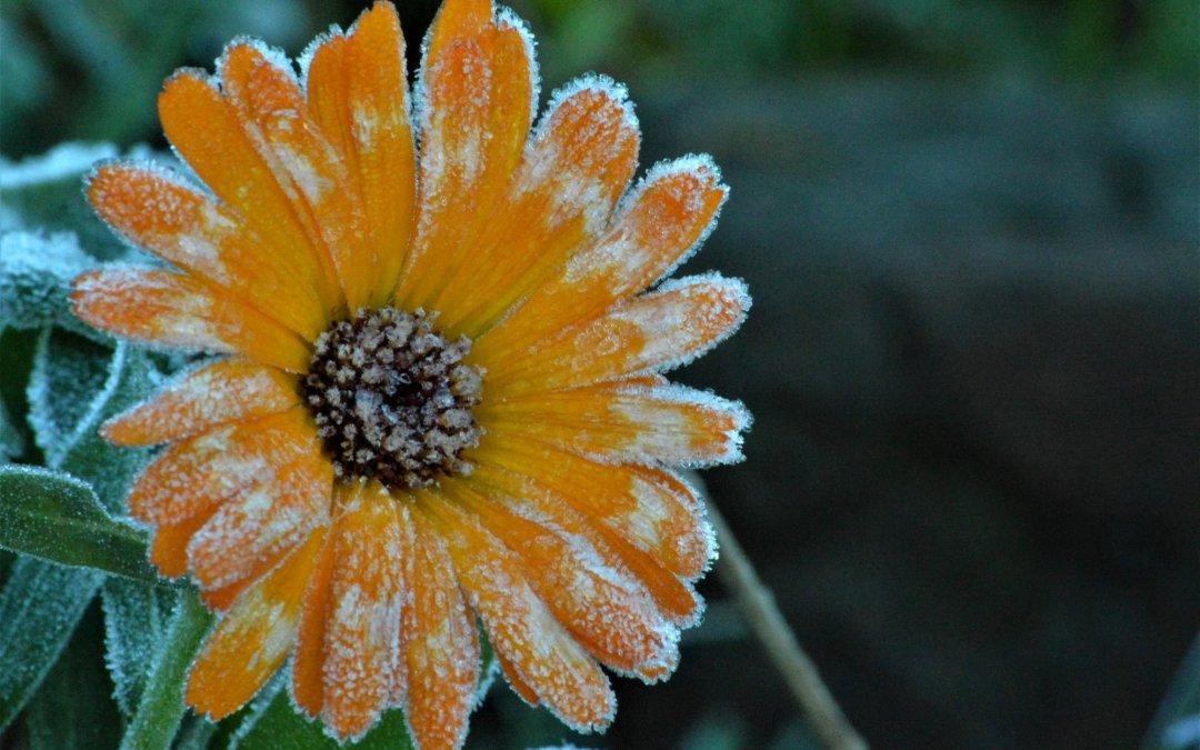 Winter In Tasmania