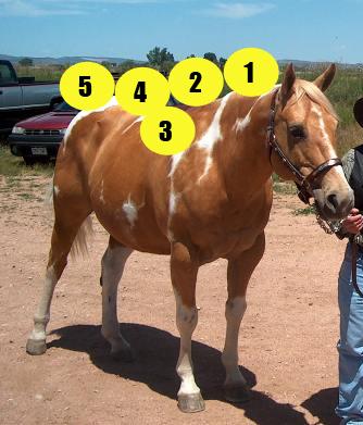 Parts of the Horse quiz - horse in halter - Mane-U