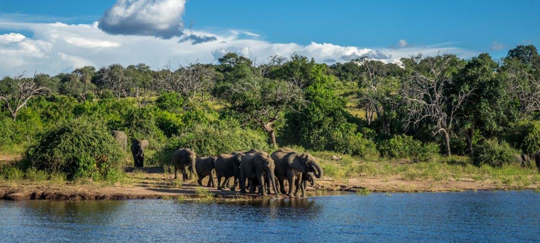 Safari au parc Chobe - safari en Afrique