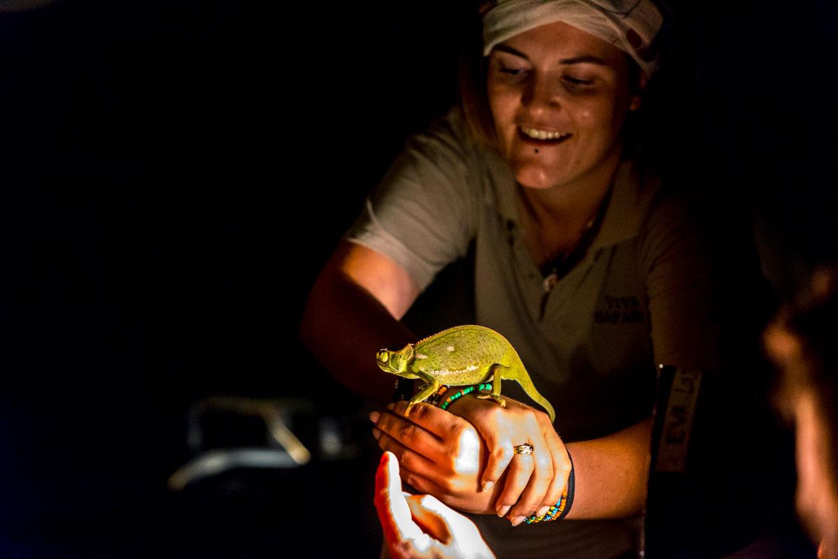 safari au parc Kruger