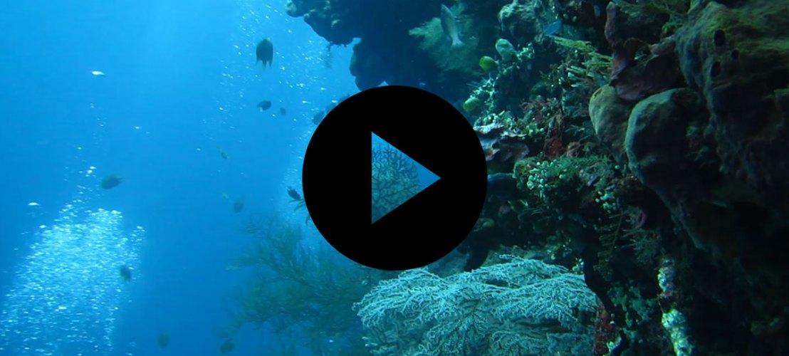 Plongée à Bali - Manekitravel