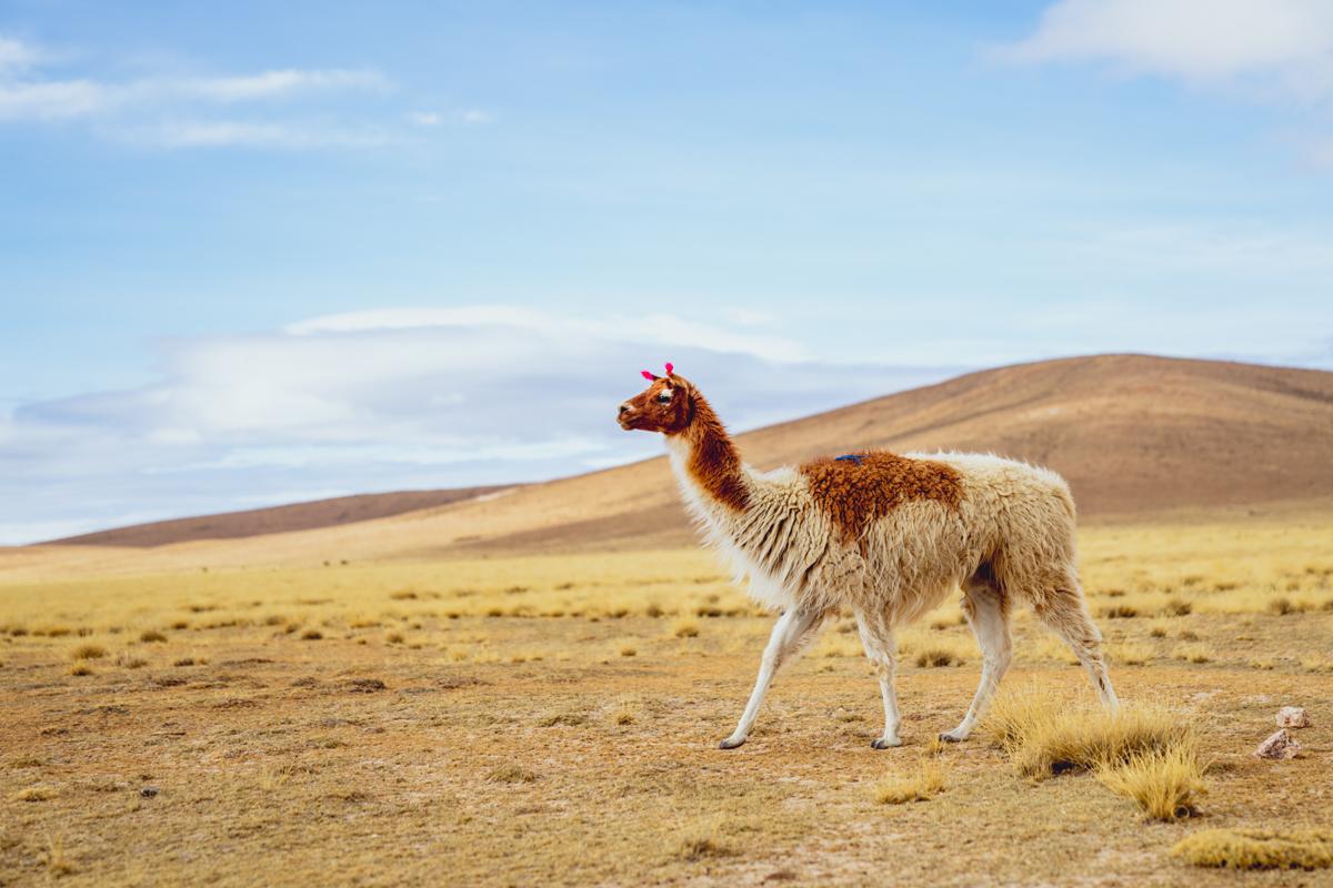 itinéraire bolivie