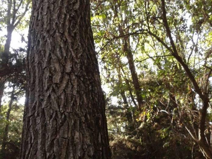 gabriela-apostu-copacul-meu1