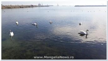gunoaie port turistic mangalia (2)