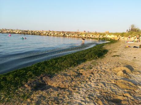 alge-plaja-mangalia-mihaela-stanescu2
