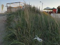 alge-plaja-mangalia-mihaela-stanescu5