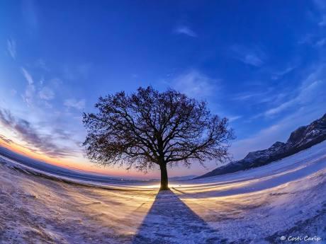 Costi_Carîp-copacul-lui-MirceaB-02