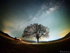 Costi_Carîp-copacul-lui-MirceaB-03c