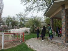 copii-din-județul-Constanța-au-vizitat-Herghelia-Mangalia-05