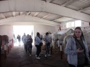 copii-din-județul-Constanța-au-vizitat-Herghelia-Mangalia-10