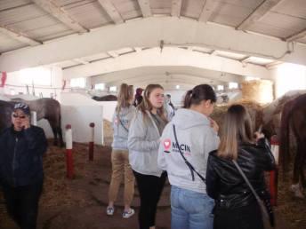 copii-din-județul-Constanța-au-vizitat-Herghelia-Mangalia-11