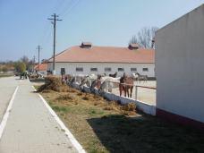 copii-din-județul-Constanța-au-vizitat-Herghelia-Mangalia-15