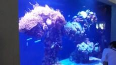 Dallas_World_Aquarium_MN (33)