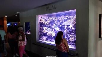Dallas_World_Aquarium_MN (64)