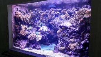 Dallas_World_Aquarium_MN (65)