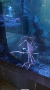 Dallas_World_Aquarium_MN (80)