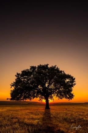 Lucian-Alin-Copacul lui Mircea Bezergheanu