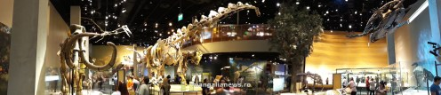 Perot Museum of Nature and Science din Dallas (62)