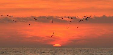 Buna dimineata, Mangalia - foto Rux Georgescu-07