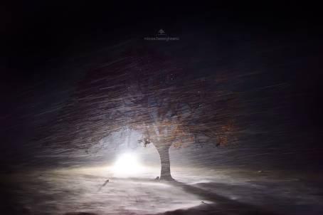 Mircea Bezegheanu - Așteptând zâne la Copacul lui Bezergheanu