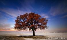 Mircea Bezegheanu - Copacul meu din Dobrogea
