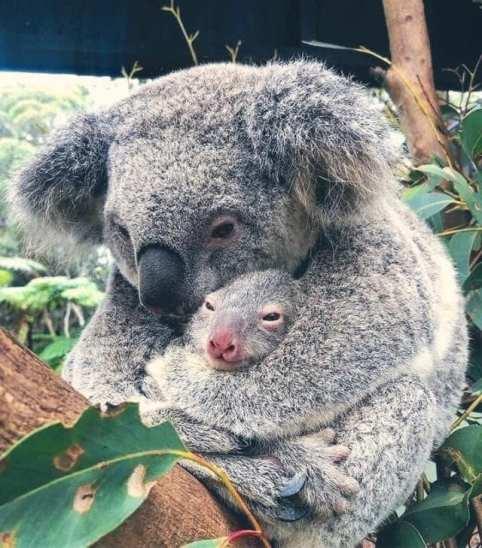 Pray for Australia15b
