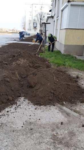 lucrari igienizare Primaria Mangalia-13