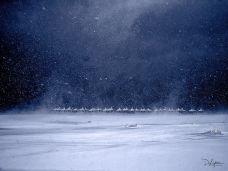 Eduard Armeanu-05 Ninge la Sulina pe plaja
