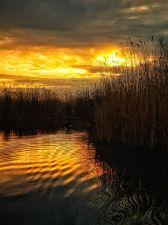 Auris Luca - Delta de dimineata