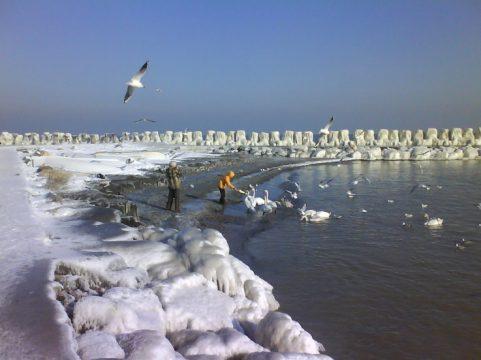 lebede-iarna-la-mangalia-2