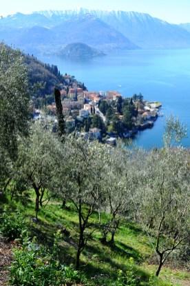 Olivicoltori Lago di Como