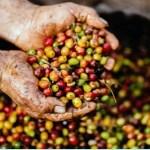 7 benefícios dos grãos de café verde